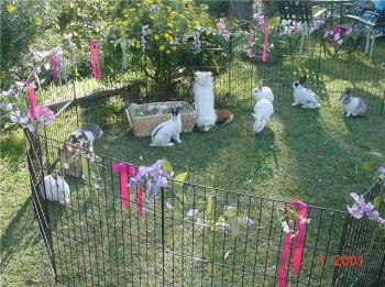 Bunny Petting Zoo