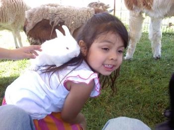 petting-zoo-bunny-climber