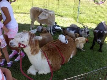petting-zoo-happy