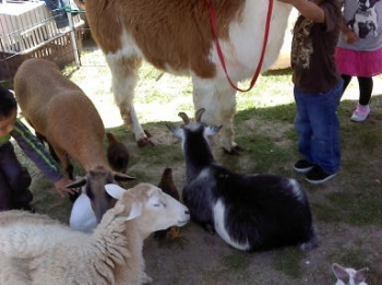 petting-zoo-promo-shot