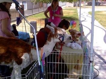 barnyard-show-zoo